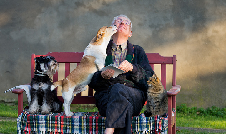 What are the best pets for Seniors?